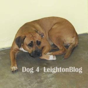 dog4_Leighton